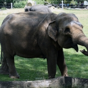 Sloni se mají v novém výběhu parádně